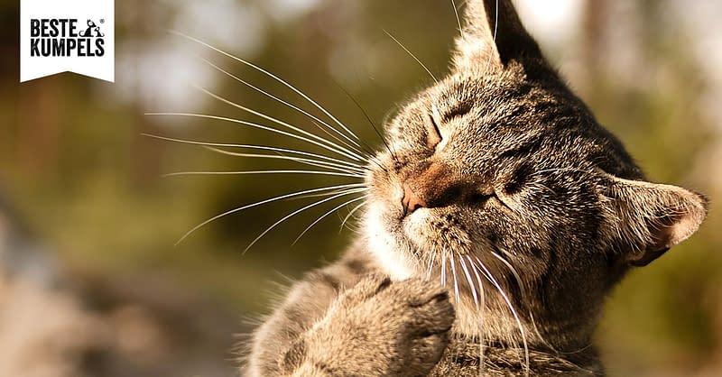 Katze im Sommer