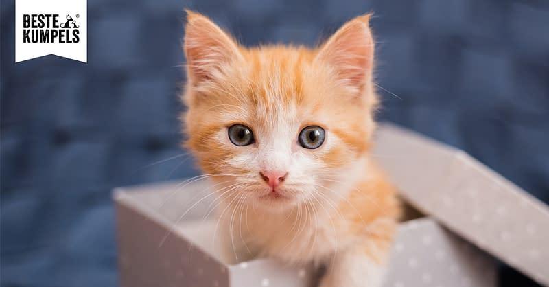 Grundausstattung für die Katze