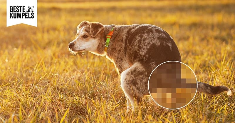Durchfall Hund