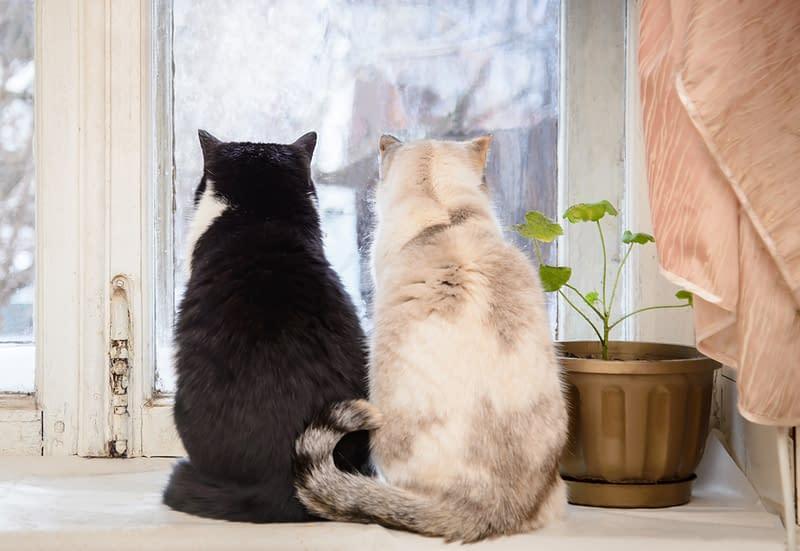 Fensterplatz für deine Katzen