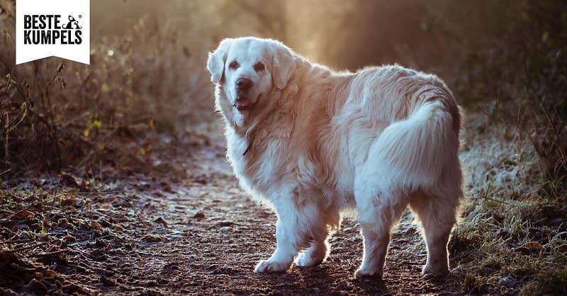 Hund mit Übergewicht