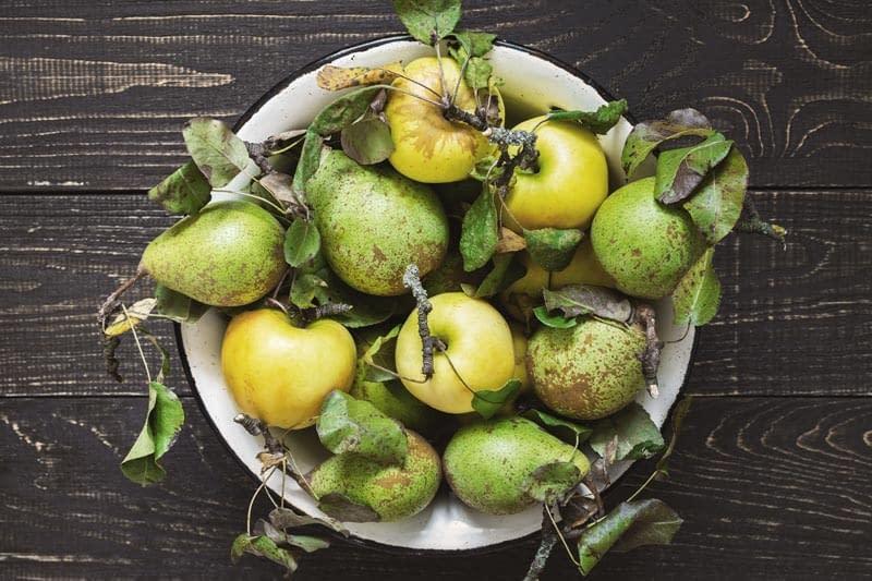 Hildegards Vitalkost mit frischem Obst
