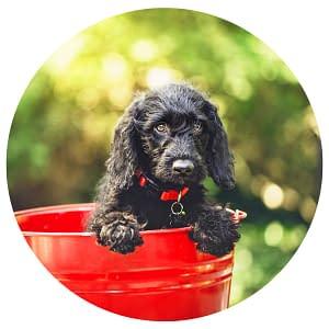 Futterberatung BARF Puppy