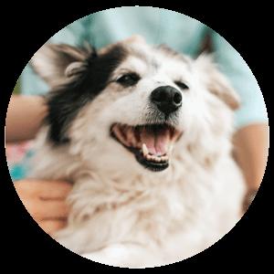 Tiertherapie Oberhausen