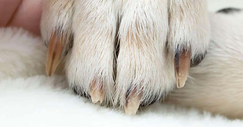 Krallenpflege beim Hund