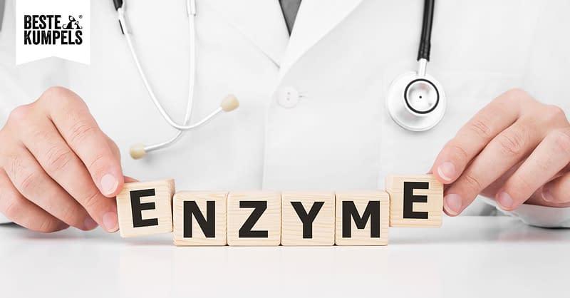 Enzyme für Hunde
