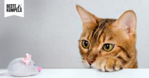 Katzen alleine zu Hause