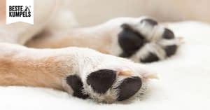 Pfotenpflege beim Hund
